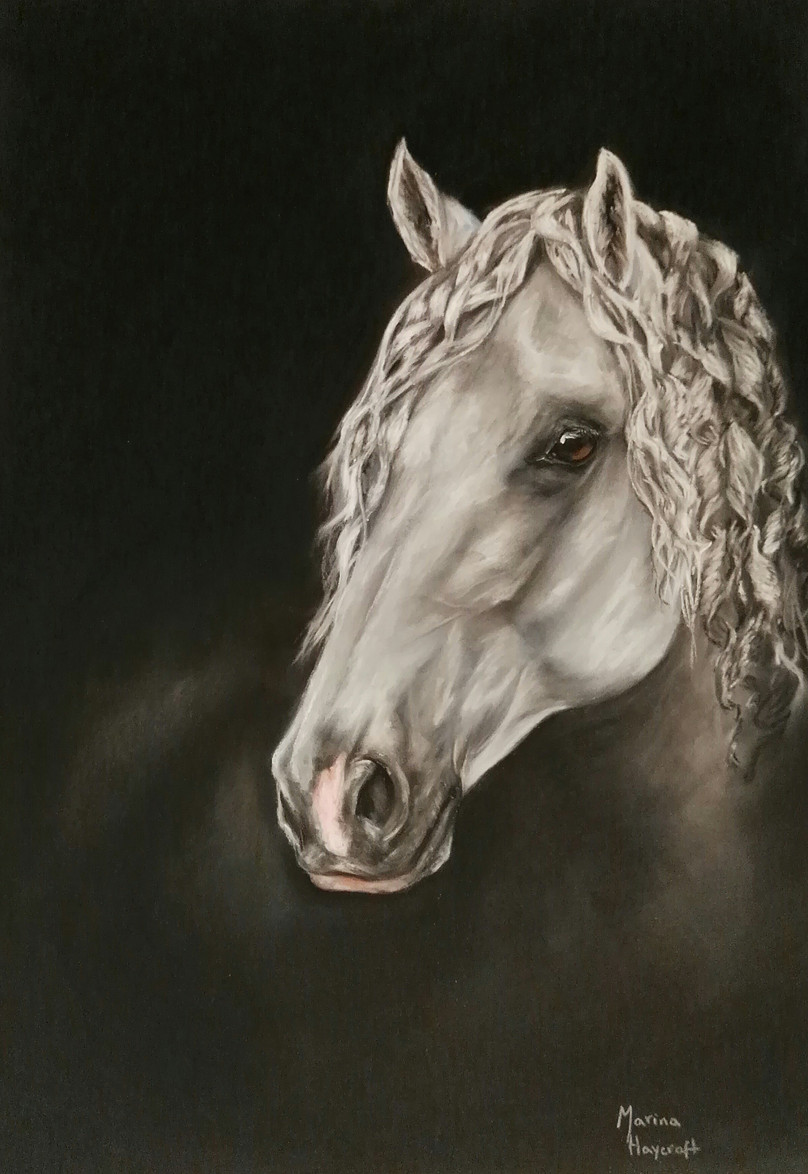 https://www.customhorseportraits.com/wp-content/uploads/Andalusian.jpg