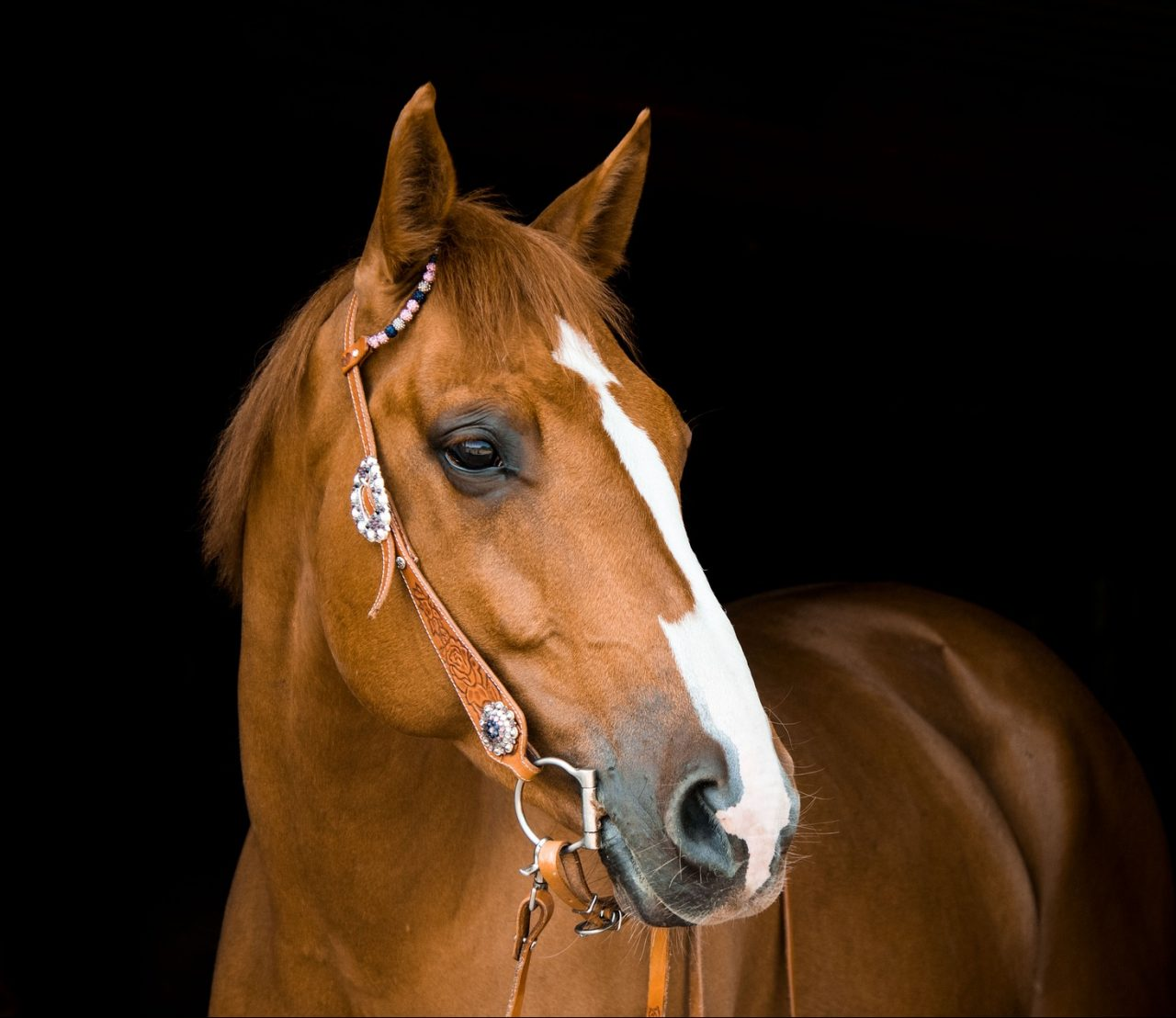 https://www.customhorseportraits.com/wp-content/uploads/horse-3390256_1920-e1542251192210-1280x1108.jpg