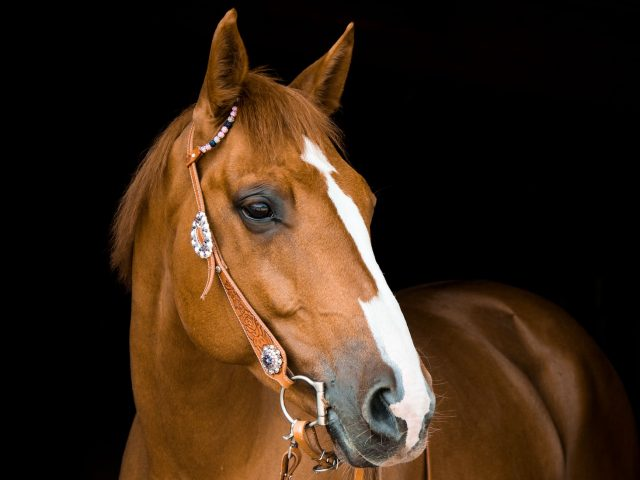 https://www.customhorseportraits.com/wp-content/uploads/horse-3390256_1920-e1542251192210-640x480.jpg